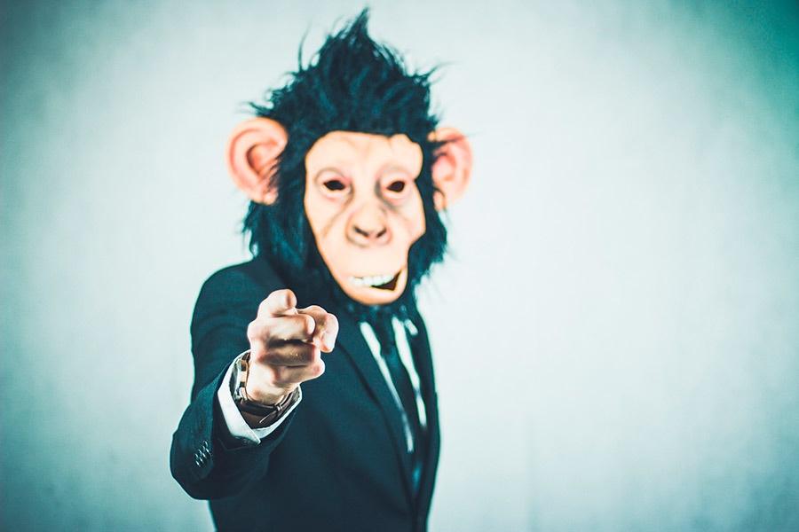 monkey-2710657_1920